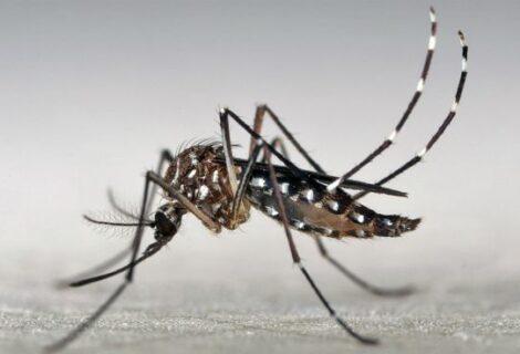 Realizarán nueva fumigación aérea en Miami contra el zika