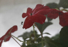 Se eleva a 217 la cifra de casos de zika autóctono en Florida
