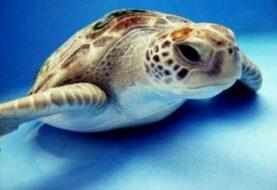 Florida aprueba plan para proteger 57 especies de fauna en peligro