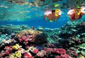 La fertilidad de los corales de la Gran Barrera afectada por el blanqueo