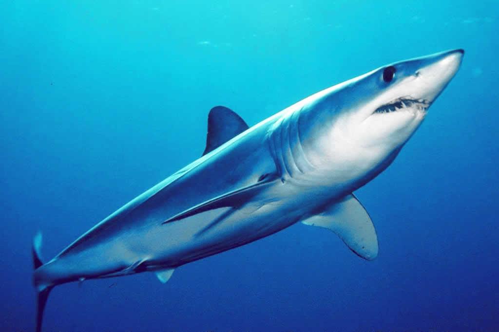 """El tiburón """"Trump"""" ganó la carrera presidencial submarina"""