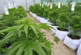 Más de 300 médicos en Florida pueden recomendar uso marihuana