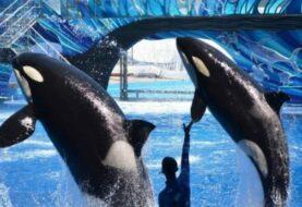 SeaWorld refuerza cambio de estrategia con nueva montaña rusa y menos orcas