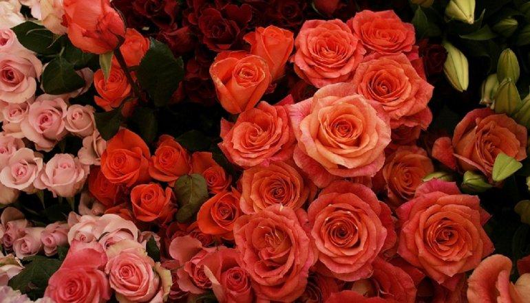 Millones de flores inundan Miami para San Valentín