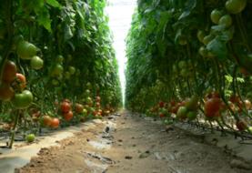 México busca nuevo acuerdo para la exportación de tomate a Estados Unidos