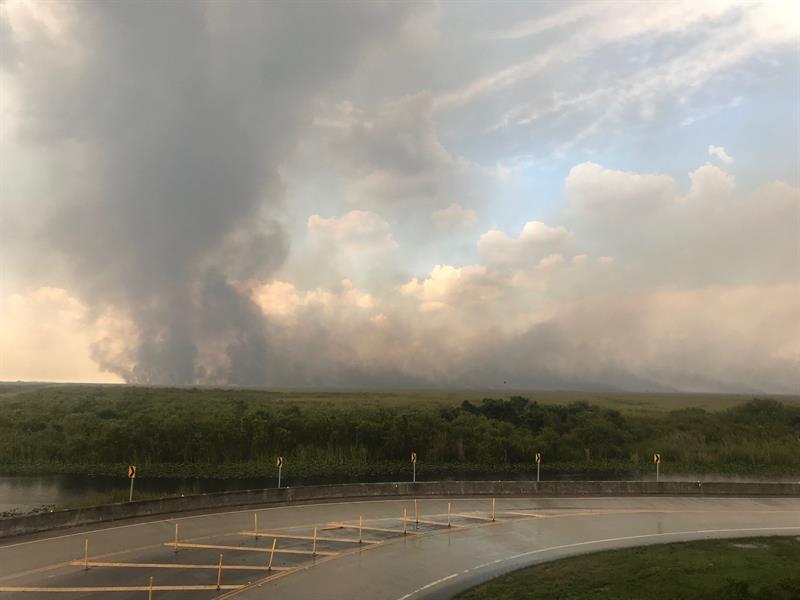 Incendio forestal consume 32.000 hectáreas de arbustos en los Everglades