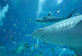 Playas de Florida registran dos ataques de tiburón con una hora de diferencia