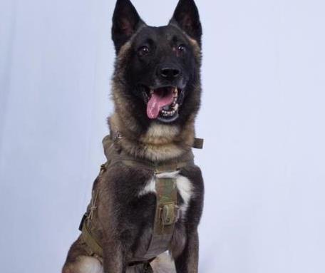Pentágono tiene su héroe canino al encontrar a Al Bagdadi