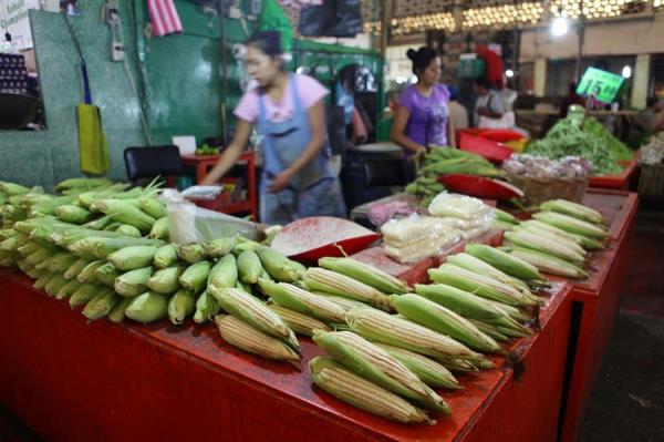 Mexicanos piden proteger patrimonio de maíz nativo