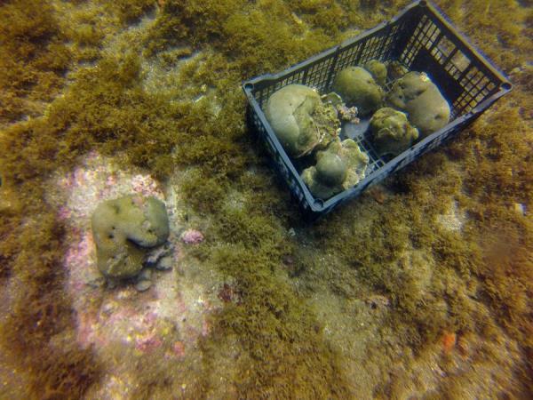 México busca salvar sus pastos marinos y corales con una nueva normativa