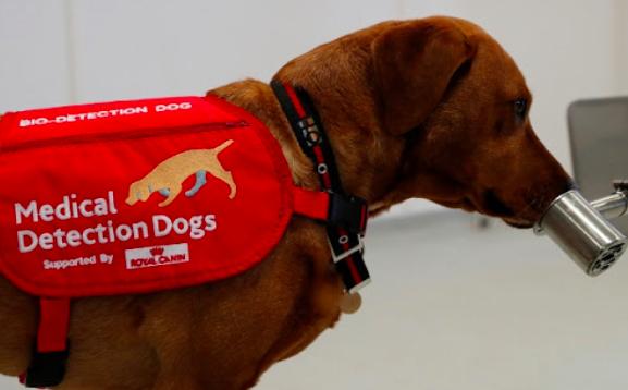 Universidad de Pensilvania investiga si los perros pueden detectar el COVID-19