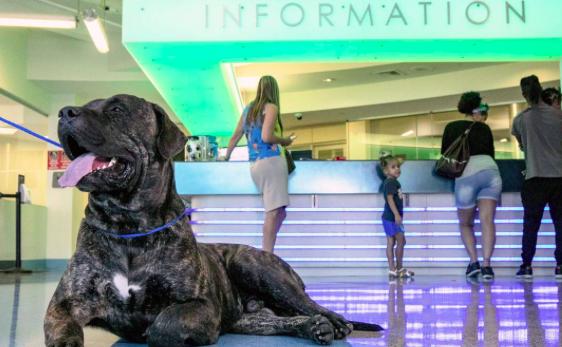 Miami-Dade reparte gratis comida para mascotas