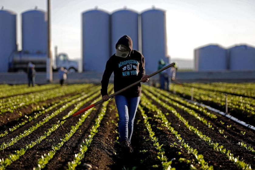 Coalición en Florida pide apoyar también a los agricultores