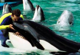 Piden a fiscal de EEUU intervenir para liberar a orca Lolita en Miami