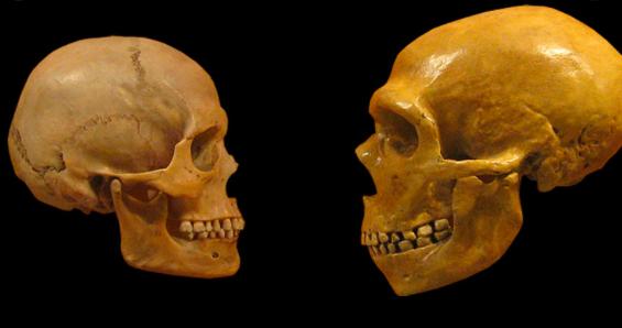 Restos de Amud pertenecieron a una mujer neandertal