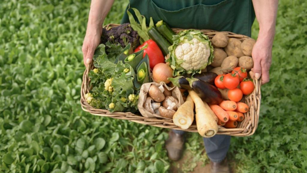 Pandemia empeorará la calidad de la alimentación mundial