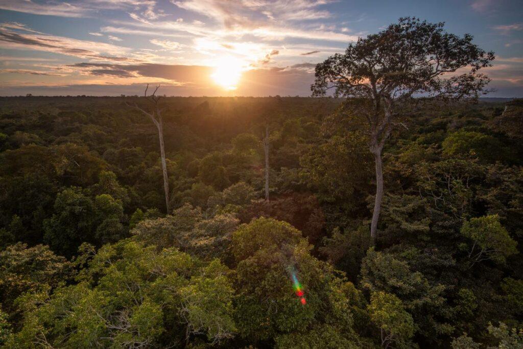 Brasil niega que la Amazonas esté en llamas