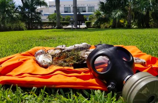 ONG pide recoger peces muertos en bahía de Miami para evitar contaminación