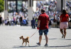 Matar mascotas sin motivo puede llevar a prisión en Portugal