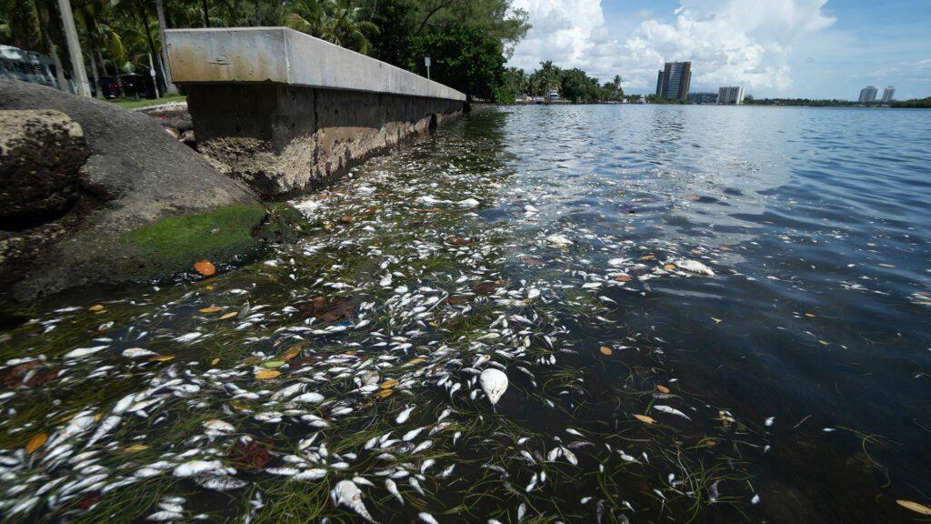Muerte de peces en bahía de Miami es por bajos niveles de oxígeno