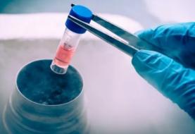 Investigación demuestra la ayuda de las células madre de la médula espinal