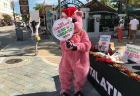 """Miami indulta a """"Chans"""" en su tradicional perdón porcino por Nochebuena"""