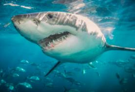 Caribe investiga el auge de población de tiburones tras recientes ataques