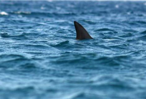 Niño fue atacado por un tiburon en Miami Beach