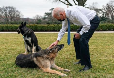 Uno de los perros de Biden vuelve a morder a una persona en la Casa Blanca