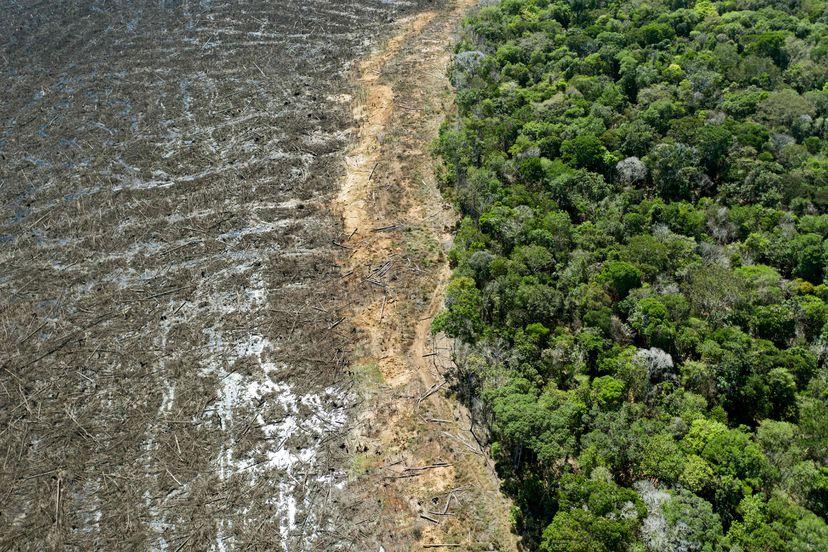 Amazonía brasileña rompe récord de deforestación