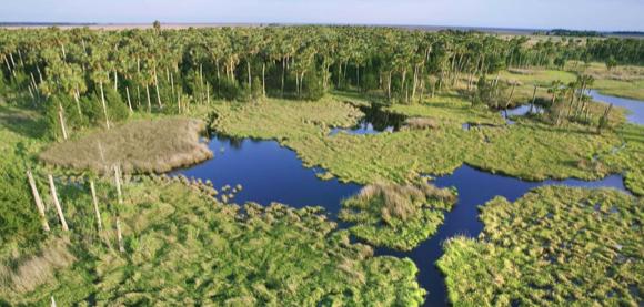 Recompensa por información que identifique a autor de incendios en Everglades