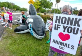 Niños activistas piden liberar a la orca Lolita