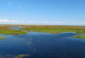 Florida emite alerta por el alto nivel de algas tóxicas