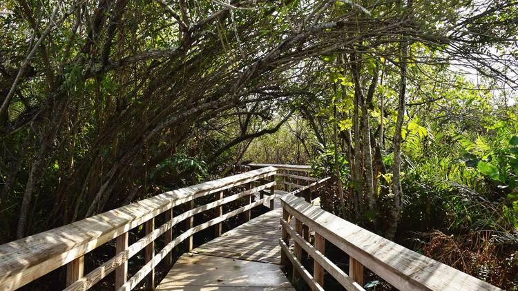 Los mejores lugares para caminar en Miami