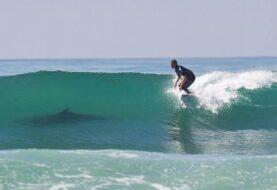 Tiburones surfean para ahorrar energía