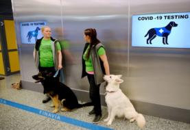 Aeropuerto de Miami prueba perros detectores de COVID-19