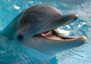 Delfines de Miami corren riesgo