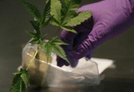 Empresa de Florida es el mayor minorista de cannabis de EEUU